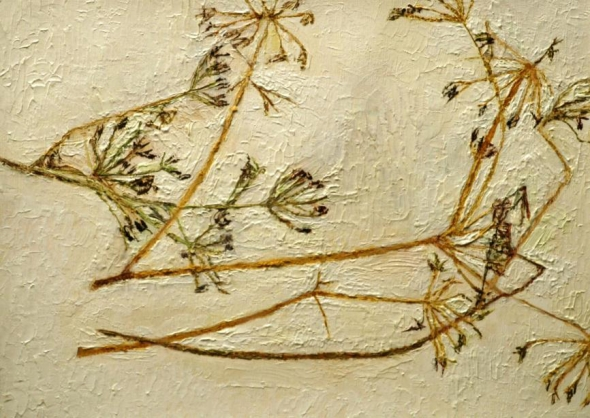 Dried Fennel II