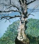 Birch Tree, 2013