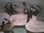 Ducks, Geese and a Moorhen on the Water, 2010-2011