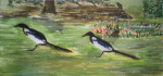 Magpies, 2011