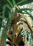 Palm Tree, 2014