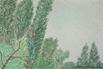 Poplar Trees, 2017