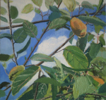 Quince Tree, 2011