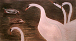 Swans and Ducks on the Water, 2011