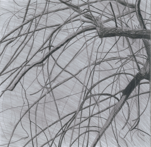 Willow Tree. Matthew Theobald.