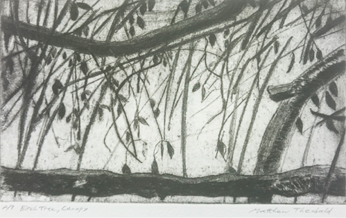 Birch Tree, Canopy