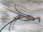 Bamboo Bird