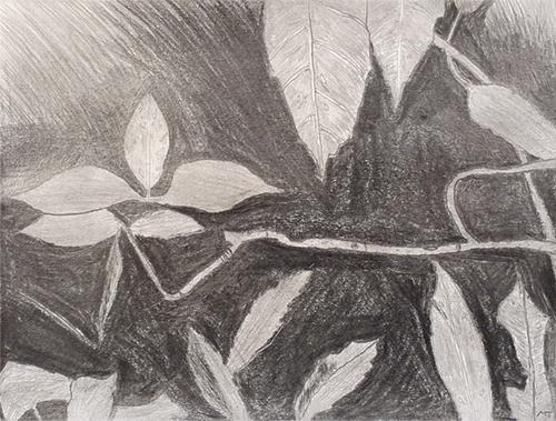 Shrouded Leaves