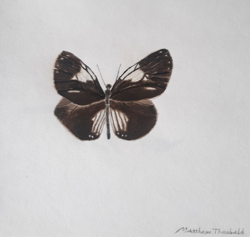 Magpie Crow Butterfly