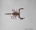 Scorpion, 2020