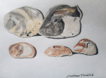 Seashells, 2020